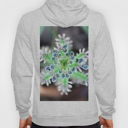A Succulent and her Babies Hoody