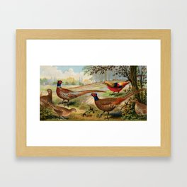 Vintage Pheasants Framed Art Print