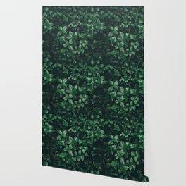 Green Leaves Wallpaper