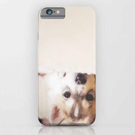 "siberian husky puppy - ""nova"" iPhone & iPod Case"