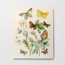 Butterflies and Flowers Vintage Illustration 5 Metal Print