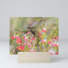 Anna's Hummingbird in Hot Lips Mini Art Print