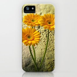 Trio of Gerbera iPhone Case