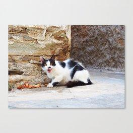 Hungry Greek cat Canvas Print