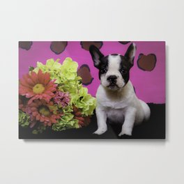Black and White French Bulldog Puppy Sitting next to a Spring Bouquet of Flowers Metal Print