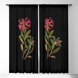 Rhododendron Ferrugineum  Mary Delany Delicate Paper Flower Collage Black Background Floral Botanica Blackout Curtain