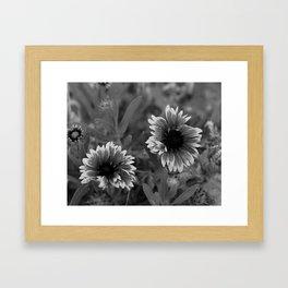 Beautful black and white gerbera flower. Framed Art Print