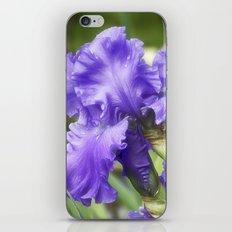 Purple Bearded Irises iPhone & iPod Skin