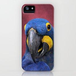 Cheeky Blue Hyacinth Macaw iPhone Case