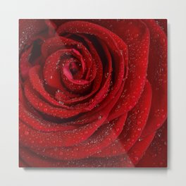 Th red rose Metal Print