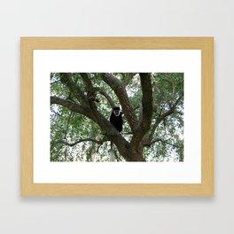 Monkeying Around 2 Framed Art Print