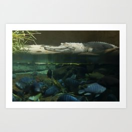 Gater Fish Art Print