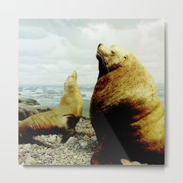 Sea Lion II Metal Print