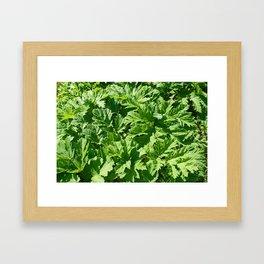 Green leaves of burdock Framed Art Print