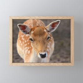 Fallow Deer Animal Mammal Framed Mini Art Print