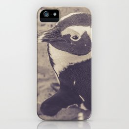 Adorable African Penguin Series 2 of 4 iPhone Case