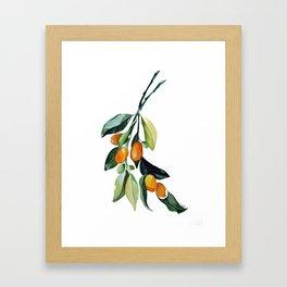Kumquat may Framed Art Print
