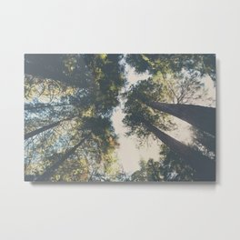 looking up in the Sequoia National Park ... Metal Print