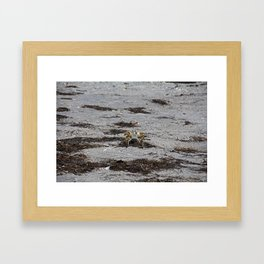 Competing Crabs Framed Art Print