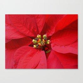 Poinsettia red Canvas Print