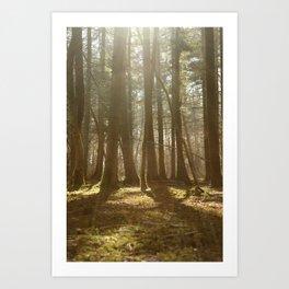 Tranquil Forest Lens Flare Art Print
