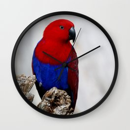 Eclectus Parrot Wall Clock