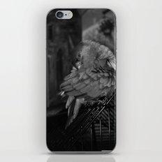Senegal Parrot iPhone & iPod Skin