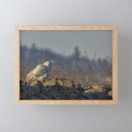 The Watchful Eye of a Snowy Beauty - cropped Framed Mini Art Print