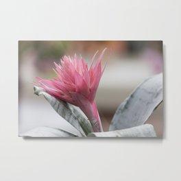 pink aechmea  flower in bloom  in the vase Metal Print