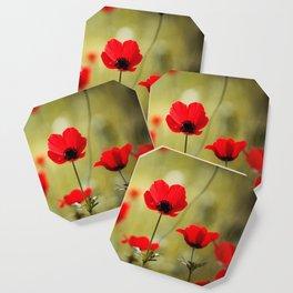 Wild Anemones Coaster