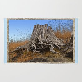 WEATHERED STUMP AND ROOTS ON BEACHSIDE BLUFF Rug