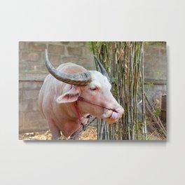 The Albino Buffalo Metal Print
