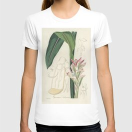 White turmeric (Curcuma zedoaria)  from Medical Botany (1836) by John Stephenson and James Morss Chu T-shirt