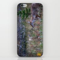 coyote iPhone & iPod Skins featuring Coyote by Stu Naranch