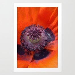 Poppy Petals Art Print