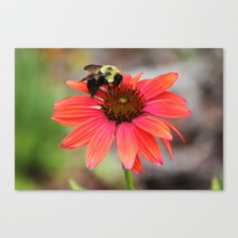 Bumble Bee On Coneflower Canvas Print