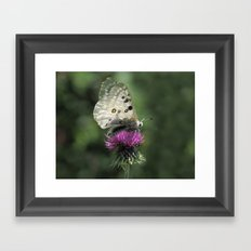 Butterfly on Thistle Flower Framed Art Print