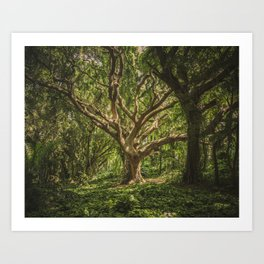 Old Green Tree Art Print