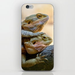Couple of bearded dragons iPhone Skin