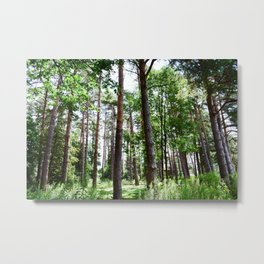 Hidden Forest Metal Print