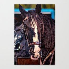 Concept Kaltblutmarkt 2018 : Horse eyes Canvas Print