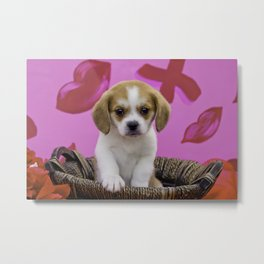 Beaglier Puppy in Basket in Front of a Pink Lips, Hugs, & Kisses Valentine's Day Print Background Metal Print
