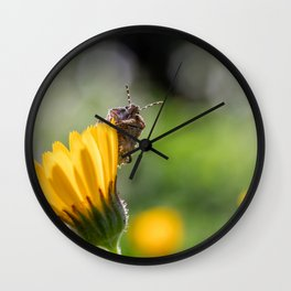 Funny insect on yellow flower Wall Clock