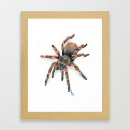 Fido-Hawaiian Cane Spider Framed Art Print