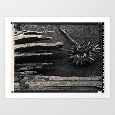 Dandelion by Jean-François Dupuis Art Print