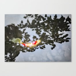 Koi in Japanese Maple Shadows Canvas Print
