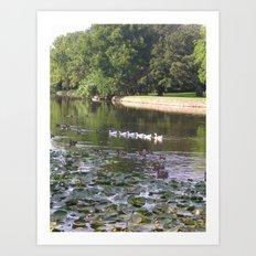 Ducks and Lilypads Art Print
