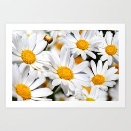 Daisy Flowers 0136 Art Print