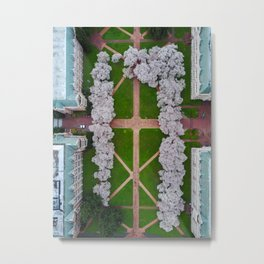 UW Cherry Blossoms: Spring Metal Print