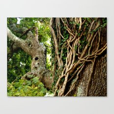 Laced! Canvas Print